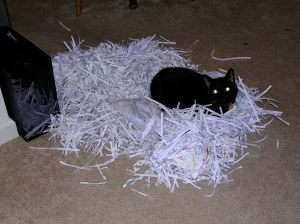 Then he decided he wanted to live, and took all the paper out of the bag to make a nest