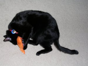 Loving a catnip fish!