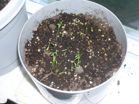 Sprouting!