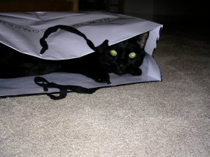 In a shopping bag