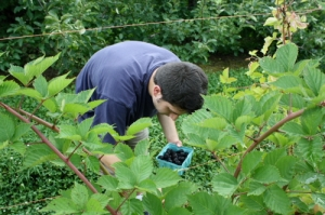 K picking blackberries