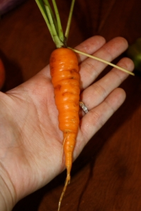 It looks like a real carrot now!