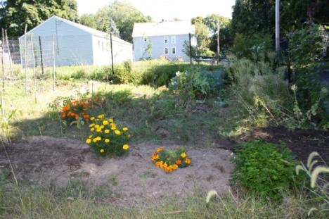 Garden this weekend
